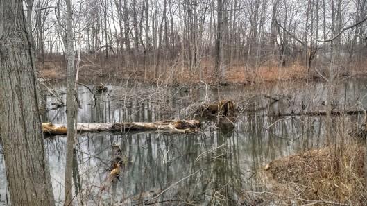 Pond on 3-8-15